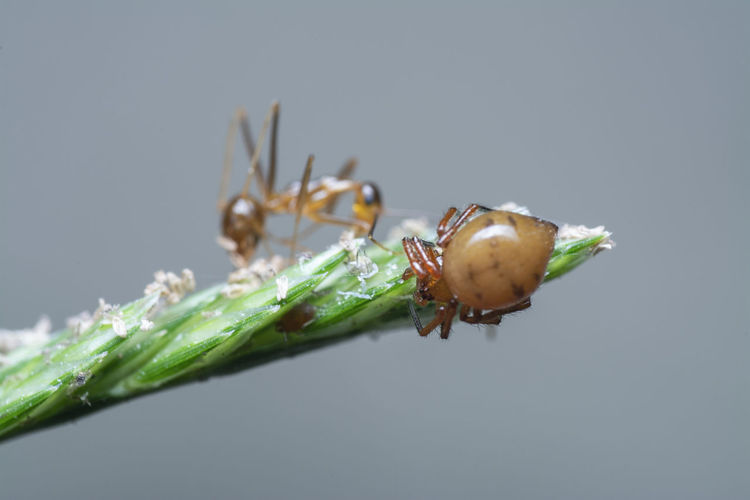 Close-up of insect on plant over white background