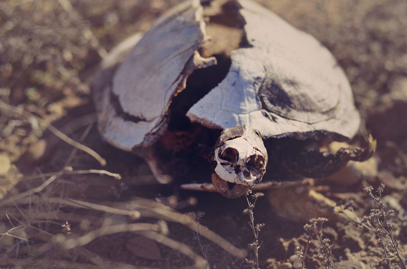 Death Decay Interesting Natural Nature Outdoors Texas Turtle