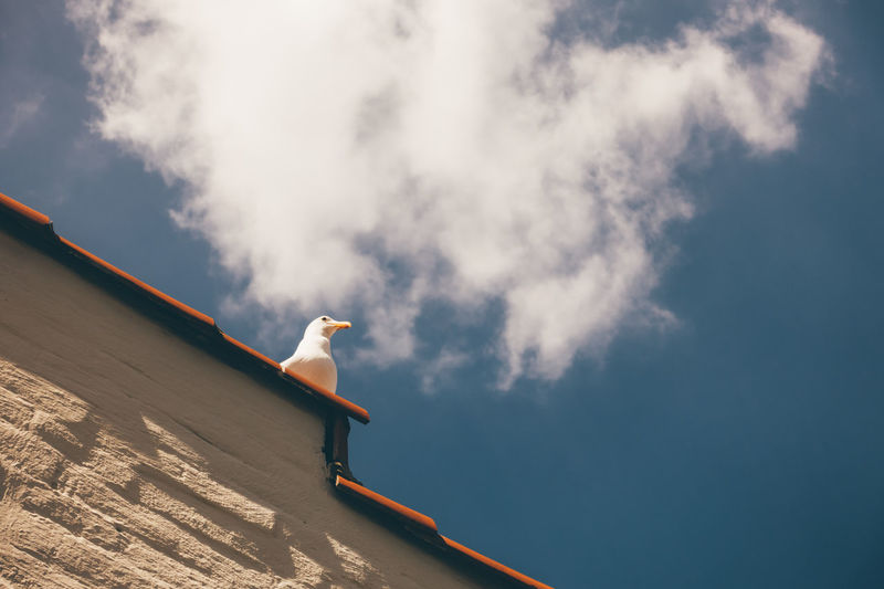Low angle view of seagull perching on roof against blue sky
