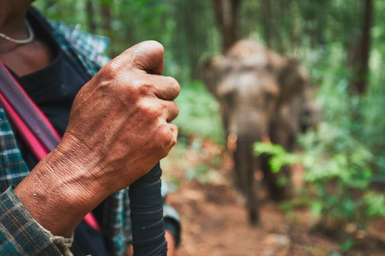 Midsection of man standing against elephant in forest