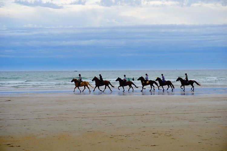 View of horses on beach against sky