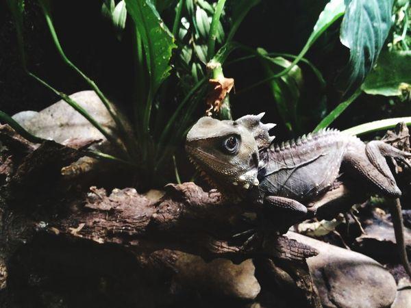 Exploring Cute Lizards Beautiful Nature Creative Light And Shadow