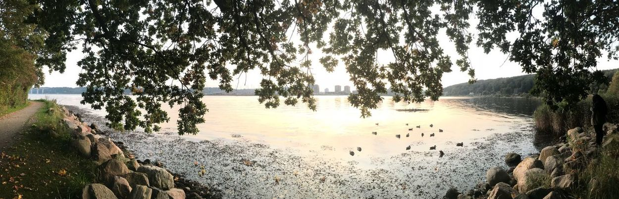 Lost In The Landscape Tree Water Nature Tranquility Beauty In Nature Scenics Outdoors Tranquil Scene Beach Day Panoramic No People Sky IPhoneography Denmark IPhone7Plus Vejle Bølgen Bredballe EyeEmNewHere