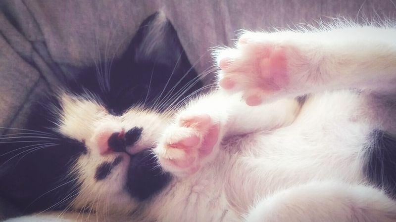 Cats Of EyeEm Cat Lovers Cat Catoftheday Pets Of Eyeem Cute Pets Sleeping Cat Pinkpaws Lovely Black And White Mustache Kittens Of Eyeem Kittenlovers Catnose