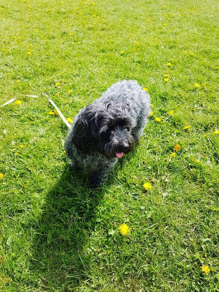 Dog friendly Lytham St. Annes High Angle View Soccer Field Grass Green Color