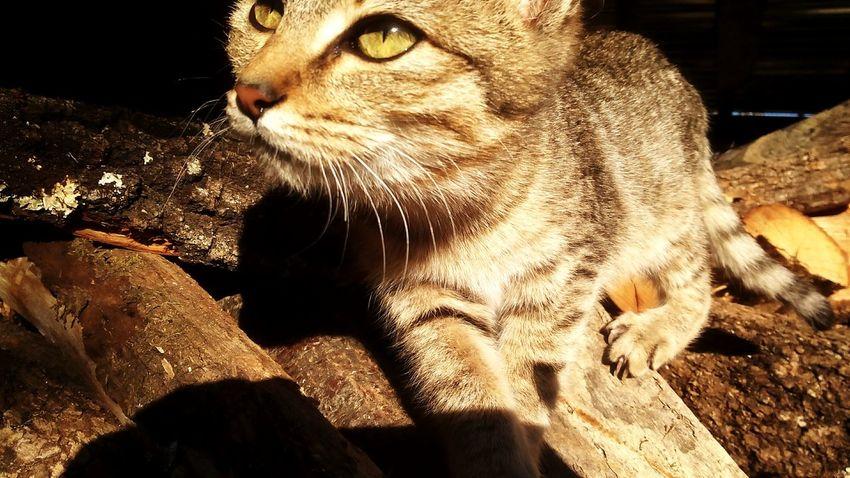My littlecat First Eyeem Photo