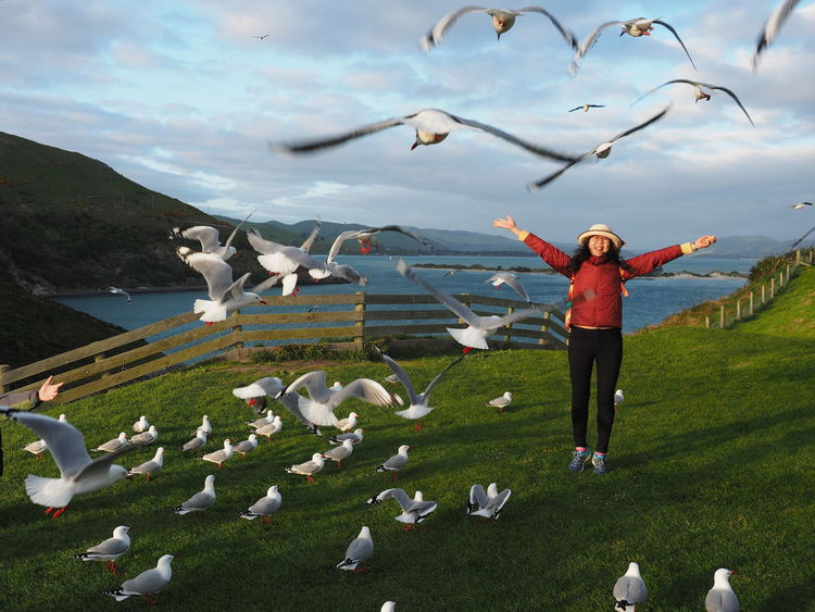 Albatross New Zealand Scenery Beauty In Nature Bird Cloud - Sky Day Field Flock Of Birds Flying Full Length Grass Joyful Moments Large Group Of Animals Lifestyles Mid-air Nature Outdoors Real People Sea Gulls Flying Seagull Sky Spread Wings Standing Young Women