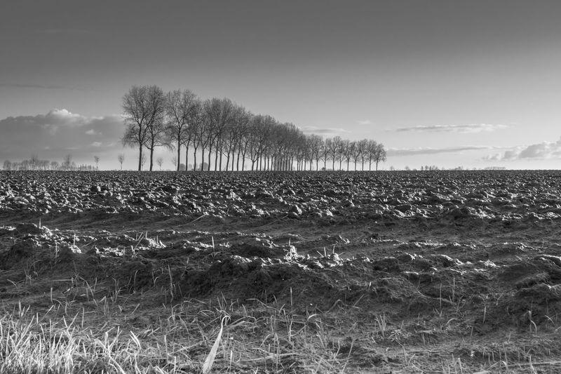 Tree line in the morning at Sint Pietersdijk, Sluis EyeEm Market © Tree Line Landscape Field Cloud - Sky Agriculture Tranquil Scene Sony A77ii Zeeuws Vlaanderen Zeeland  The Netherlands Black And White Morning Light