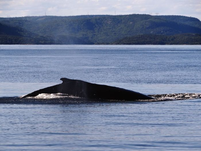 Holidays Whale Watching Tadoussac
