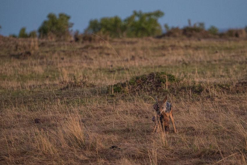 Africa Safari East Africa Kenya Massai Mara Massai Mara Airstrip Nature Wildlife & Nature Ziseetheworld