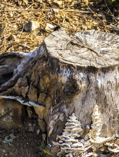 Bug on stump Animal Background Bark Bug Concentric Circles Concentric Rings Deadtree Dried Ecology Environment Insect Log Lumber Nature Rough Stump Surface Tree Truck Wooden
