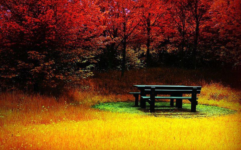 😍😍😍😍❤️❤️❤️❤️❤️ Sonbahar Da Yapraklarını Döker🍃 Manzara Dediğin  Manzara😍😍 ◽️♠️◽️ ⬛⬜ ◾◽◾ Takip Et Takipteyim◻▪ Ağaçlar ♥♡♥