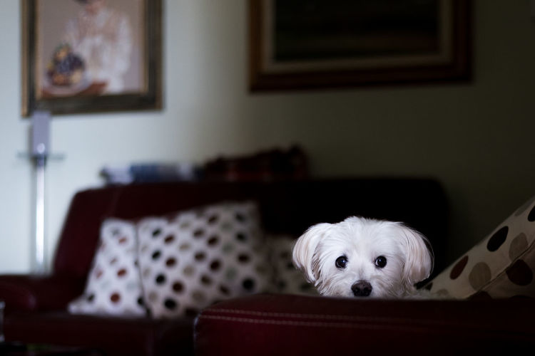 Portrait of dog at home