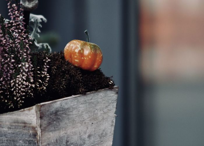 """Home decoration with a small pumpkin and winter plants"""" Christmas Time Copy Space Home Plants The Week On EyeEm Winter Beauty In Nature Blossom Close-up Decoration Focus On Foreground Food Food And Drink Freshness Fruit Garden Growth Healthy Eating Nature No People Orange Color Outdoors Pumpkin Small Pumpkins Wooden"""