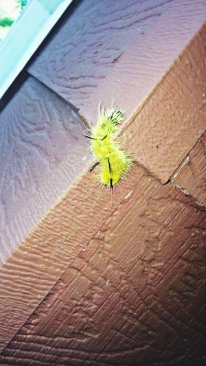 Found this beauty on our adventure today ! Catapiller Beautiful ♥ Adventure Taking Photos