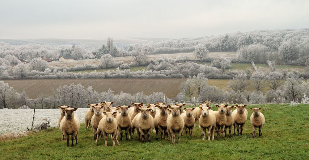 Animal Themes Campagne Champs Flock Of Sheep Girl Hi Hiver Igersyonne Landscape Large Group Of Animals Mountain Nature Nature No People Outdoors Paysage Sheep Vertical