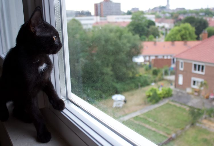 Cat Cats Of EyeEm Black Kitten Black Cat Staring At The World Staring Window Appartment View Domestic Animal Pets One Animal No People Day Domestic Animals Curious Sad Looking Through Window