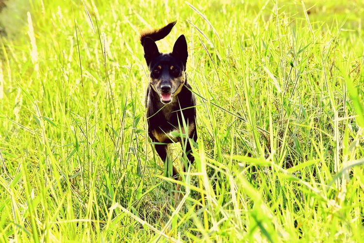 dog Pets Dog Field Grass Green Color