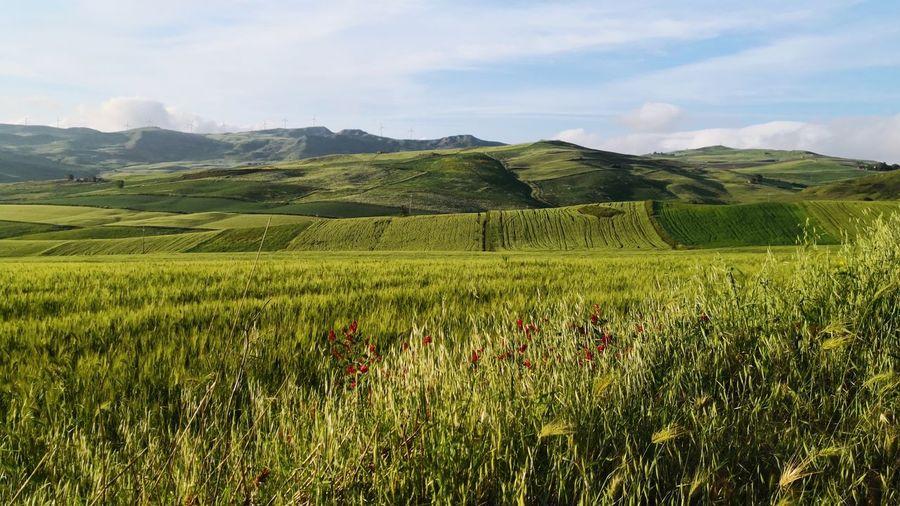 Grass Tea Crop Tree Mountain Rural Scene Agriculture Irrigation Equipment Field Crop  Sky Landscape