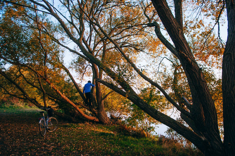 Man amidst trees in forest during autumn
