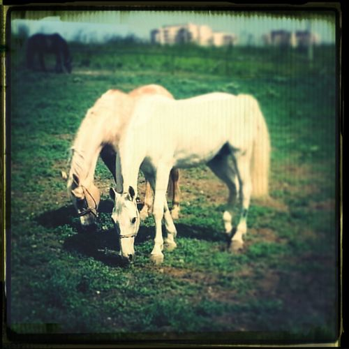Horse Love Nature Enjoying The Sun