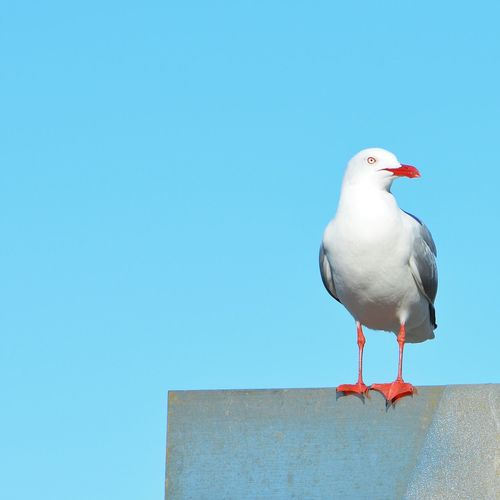 Close-up of bird perching on wall