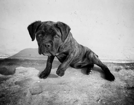 EyeEm Selects Pets Domestic Animals Mammal Animal Themes One Animal