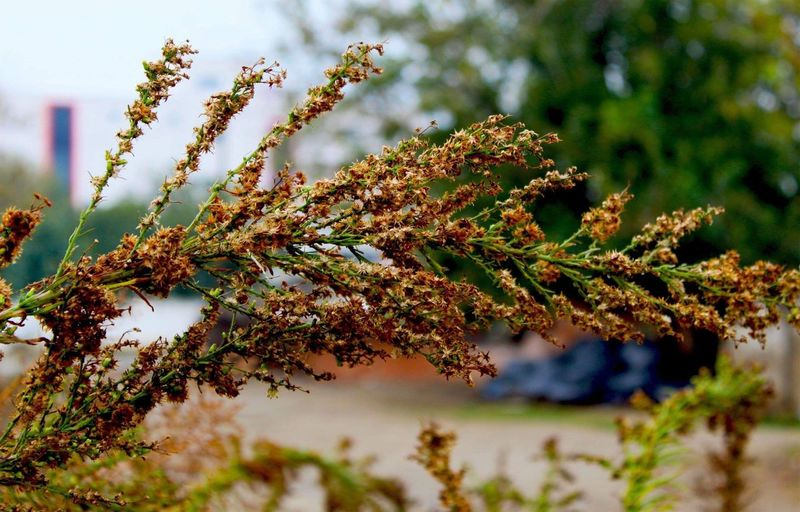 Close-up of moss on branch against blurred background
