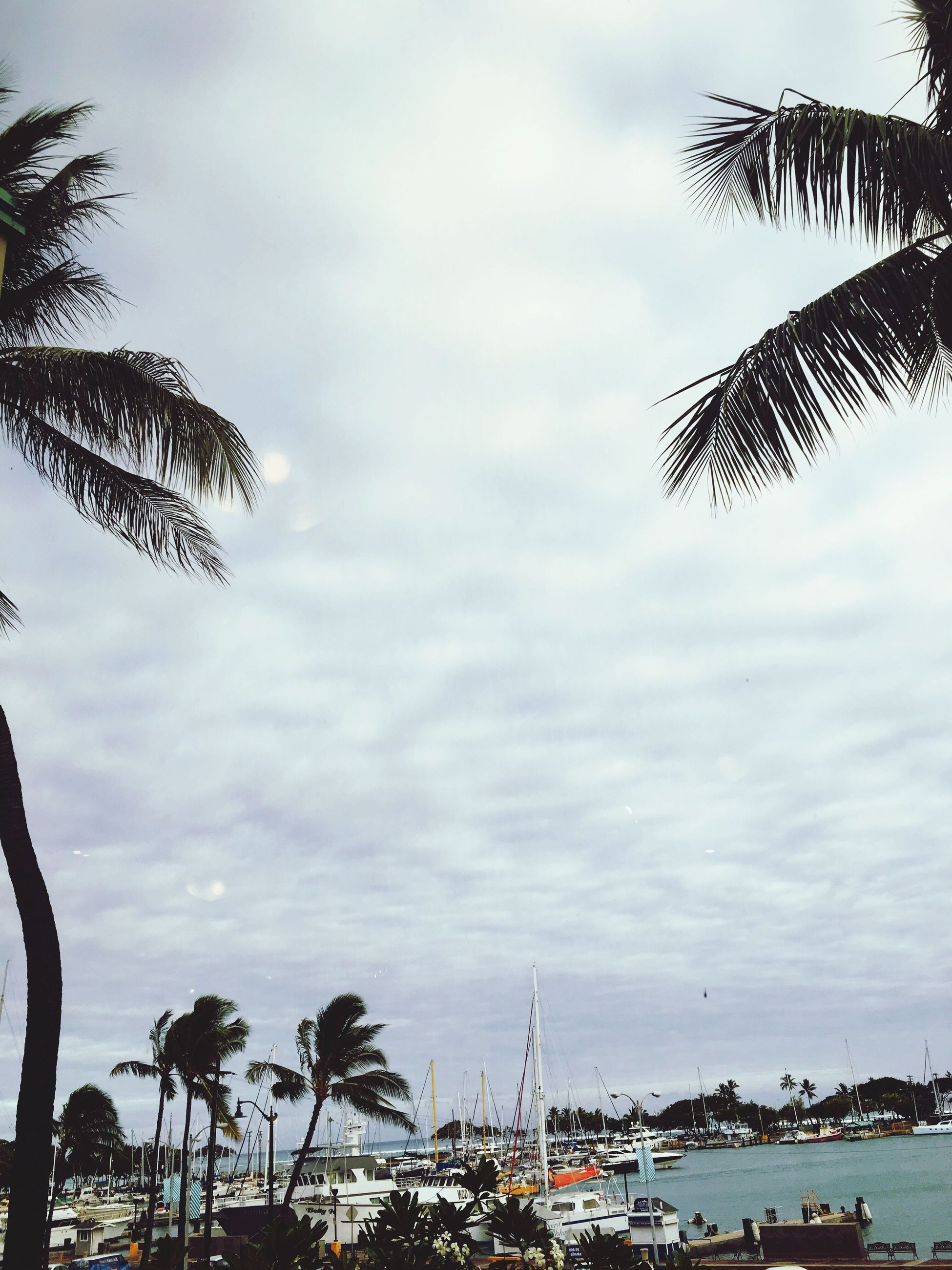 palm tree, sky, tree, cloud - sky, cloudy, sea, water, cloud, growth, nature, low angle view, tranquility, beauty in nature, scenics, coconut palm tree, outdoors, day, beach, tranquil scene, transportation