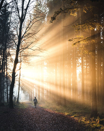 Rays for days! Tree Plant Fog Land Tranquility Forest Nature Tranquil Scene Beauty In Nature One Person Leisure Activity Trunk Scenics - Nature Real People Non-urban Scene Tree Trunk WoodLand The Way Forward Lifestyles Outdoors Sun Sunrays Rays Of Light Walking Walk
