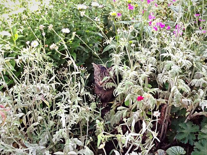 CAT Nature Plant Day Outdoors No People Leaf Growth Flower