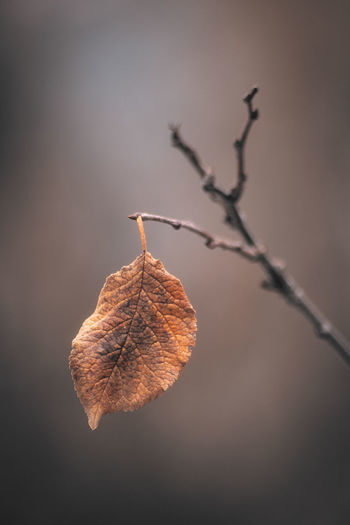 One, all alone. Fragility Day Leaf Vein Tree Brown Branch Dead Plant Plant Stem Twig Vulnerability  Focus On Foreground Plant Close-up Leaf Nature Plant Part Autumn Collection Outdoors Leaves Autumn Change Dry No People Natural Condition Wilted Plant