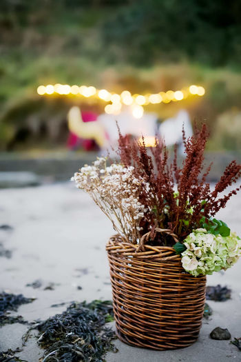 Close-up of potted plants in basket