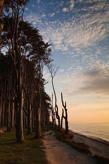 Coastal forest in Nienhagen, Germany. Baltic Sea Beach Beauty In Nature Branch Calm Cloud - Sky Evening Gespensterwald Growth Horizon Over Water Nature Nienhagen Germany Non-urban Scene Ocean Outdoors Sea Shore Silhouette Sky Sunset Tranquil Scene Tranquility Tree Tree Trunk Water