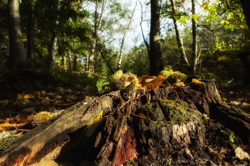 Creech Woods Creech Woods Forest Of Bere Hampshire  England Trees Woods Tree Trunk Leaves Tree Forest Close-up