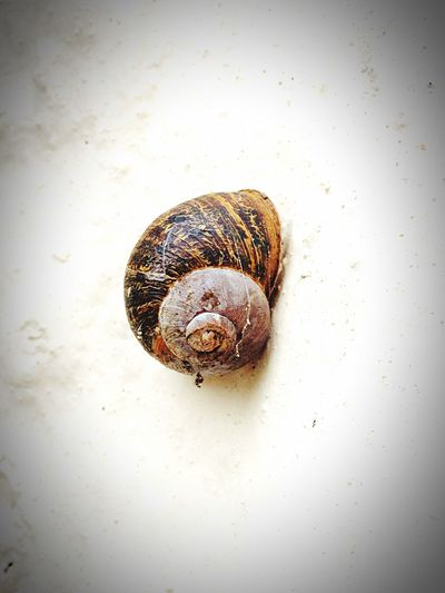 Snail Spiral Geometry Deceptively Simple Nature