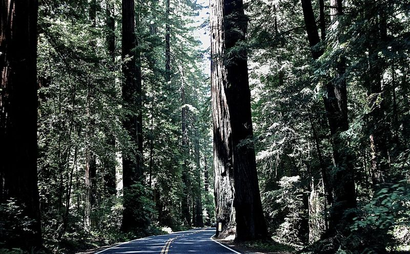 Prairie Creek Redwoods State Park Prairie Creek Forest In The Forest Magic Forest Nature_collection On The Road EyeEm Nature Lover Naturelovers Redwoods Redwood Forest