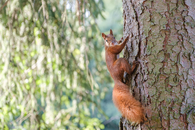 Squirrel on tree trunk