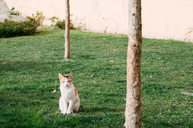 Cute cat * Alertness Animal Themes Cat Curiosity Cute Day Domestic Animals Domestic Cat EyeEm Best Shots EyeEm Gallery EyeEm Nature Lover Fence Field Forest Grass Mammal Nikon One Animal Perspective Pets Relaxation Relaxing Sitting Tree Trunk Zoology