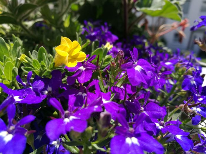 Flowering Natural Light