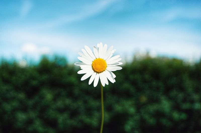 2019 Niklas Storm Juni Flower Head Flower Yellow Summer Petal Uncultivated Meadow Wildflower Springtime In Bloom Flowering Plant Blooming Plant Life My Best Photo The Minimalist - 2019 EyeEm Awards