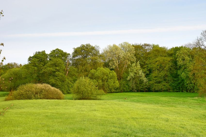 Beauty In Nature Day Field Grass Green Color Growth Idyllic Idyllic Scenery Landscape Nature Nature Photography Nature_collection Naturelovers No People Outdoors Park - Man Made Space Scenics Schlosspark Blumberg Sky Tranquil Scene Tranquility Tree