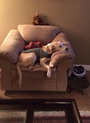Senior Dog Coping Separation Anxiety Melancholic Pooch