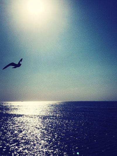 Bırak uyusun şu deniz kanatlarının altında Gel gezmelere gidelim biz bulutların asfaltında Hiç yaşamamışız gibi olacak sonunda Ben kendi yoluma gideceğim güneş kendi yoluna ... Soaking Up The Sun Escaping Swimming Enjoying Life