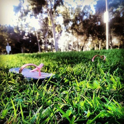 California Christmas Flipflops Wilsonpark Grass Green summerindecember CaliforniaChristmas