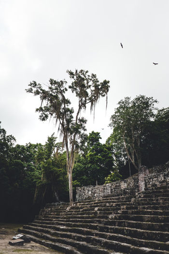 Tree Plant Staircase Architecture Sky Nature Bird History The Past Animal Animal Themes Day Vertebrate Low Angle View No People Built Structure Growth Steps And Staircases Flying Outdoors Ancient Civilization Maya Mexico Jungle