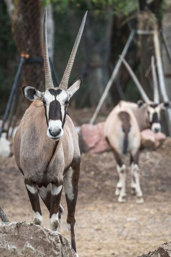 Deer standing in zoo