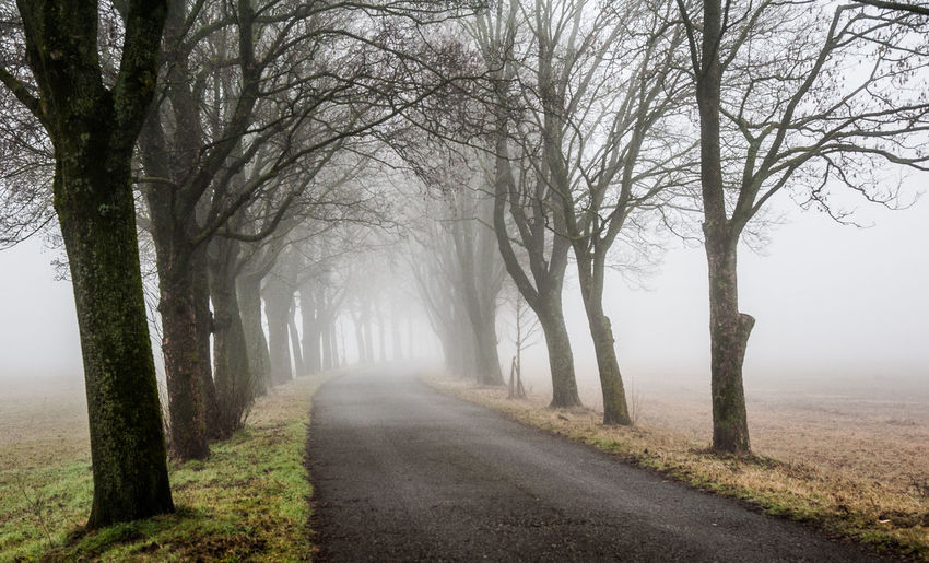 Road amidst bare trees