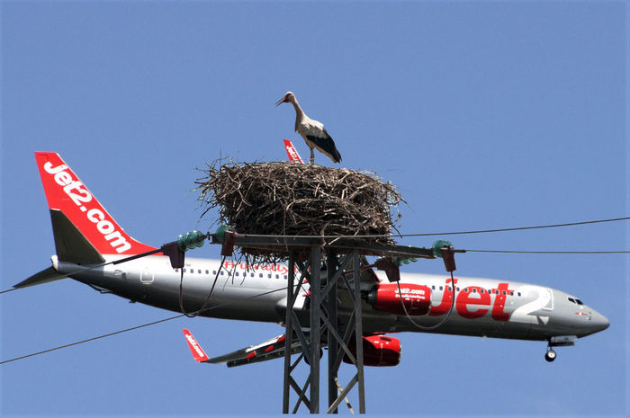 Cigogna #FlightPlane #Nature  #airplane #avion Animal Themes Animals In The Wild Bird Clear Sky Day Low Angle View Nature No People Outdoors Sky Stork White Stork