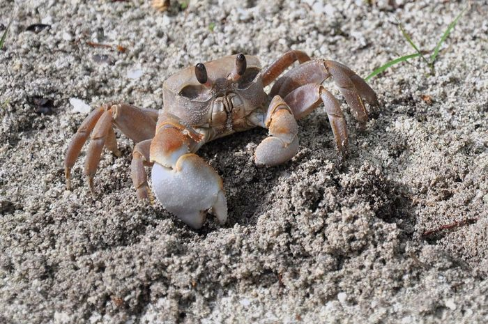 Sea Life Beach Crustacean Sand Hermit Crab Crab Animal Themes Close-up Seashell Animal Shell